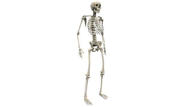 animation of a human skeleton rotating 360 degrees. - biomedizinische illustration stock-videos und b-roll-filmmaterial