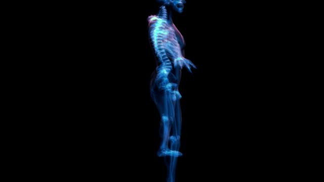 stockvideo's en b-roll-footage met animation of a skeletal x-ray man.  the camera zooms in on the man's reproductive organs as the x-ray model rotates. - blaas urinewegstelsel