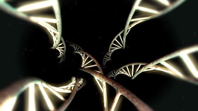 Animation of DNA strands within the body. The camera spins through 90 degrees as it travels along the strands.