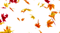 Animation of falling autumn leaves