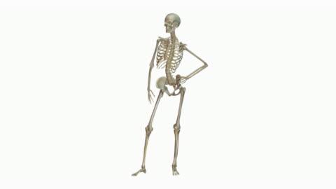 animation of human skeleton - human representation stock videos & royalty-free footage