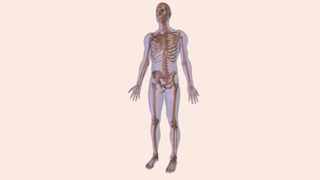 animation of human skeleton - biomedical illustration stock videos & royalty-free footage