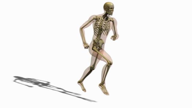 vidéos et rushes de animation of person running - illustration biomédicale