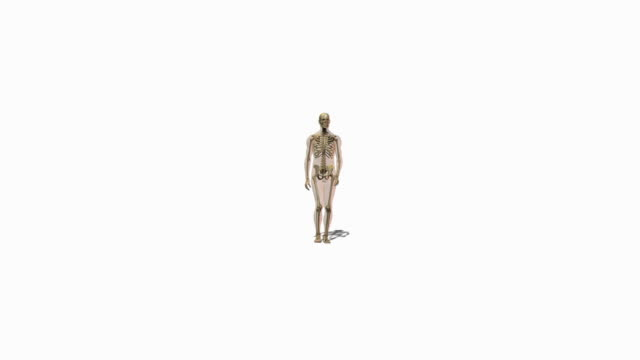 animation of person walking - biomedical illustration stock videos & royalty-free footage