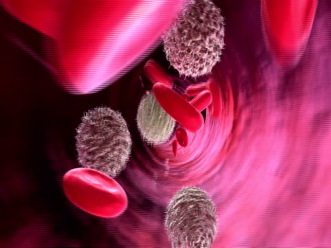 animation of red blood cells and lymphocytes pumping through blood vessels to camera - 白血球点の映像素材/bロール