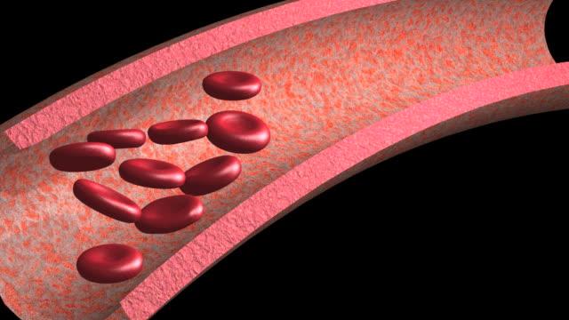 vídeos de stock, filmes e b-roll de animation of red blood cells flowing along blood vessel - grosso