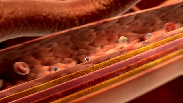 vídeos de stock, filmes e b-roll de animation of red blood cells, white blood cells and platelets flowing through an artery.  the sectioned walls of the artery are also shown as the camera pans from left to right. - animação digital