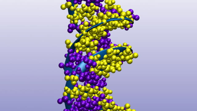 animation of rotating dna model with base pairs in violet and yellow, sugar-phosphate backbones in blue - chromosome stock videos & royalty-free footage