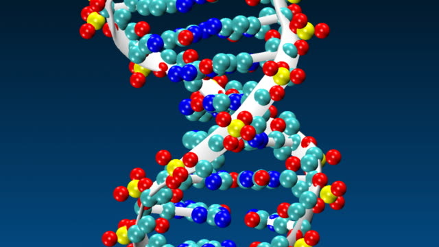 vídeos de stock e filmes b-roll de animation of rotating dna molecule - adn