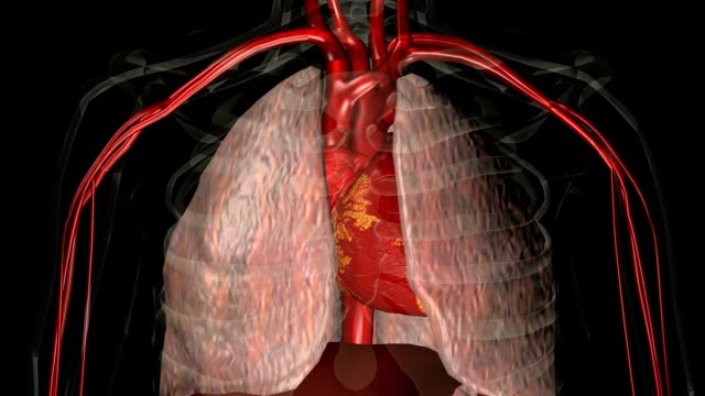 animation of the human heart - digital animation stock videos & royalty-free footage