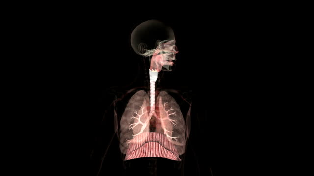 animation of the human respiratory system - inhaling stock-videos und b-roll-filmmaterial
