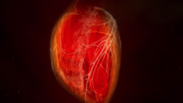 vidéos et rushes de animation sequence showing the heart beating. - image de mouvement vibratoire