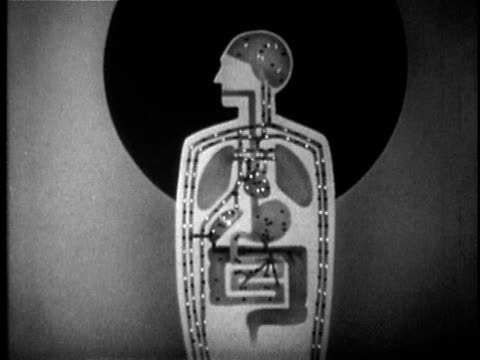 1949 B/W Animation showing alcohol within the digestive and circulatory system, USA, AUDIO