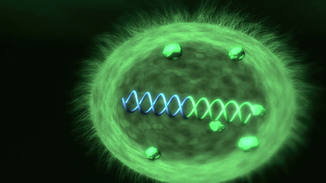 Animation showing an example of the use of synthetic biology, to create bacteria engineered to detect the presence of parasites.
