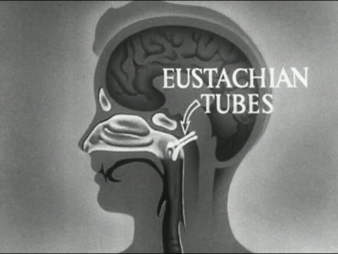 1955 animation the path of germs from the nasal passages to lungs / audio - biomedical animation stock videos & royalty-free footage