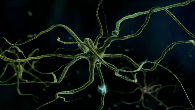 Animation traveling through the central nervous system or CNS where neuron activity occurs. The nerve impulses are visible traveling through the neurons and across the synaptic cleft.