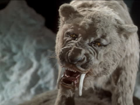 a animatronic saber-toothed tiger growls. - monster fictional character stock videos & royalty-free footage