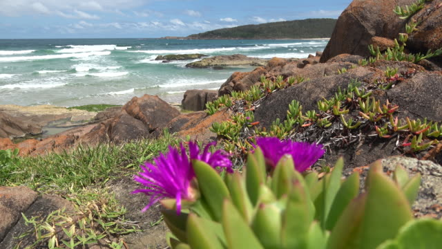 anna bay - wildflower stock videos & royalty-free footage