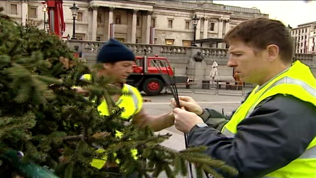 annual norwegian christmas tree erected in trafalgar square england london ext general views and close ups of preparation and erection of the annual... - erezione video stock e b–roll