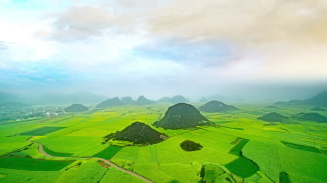anola field or rapeseed flower field in luoping china - oilseed rape stock videos & royalty-free footage