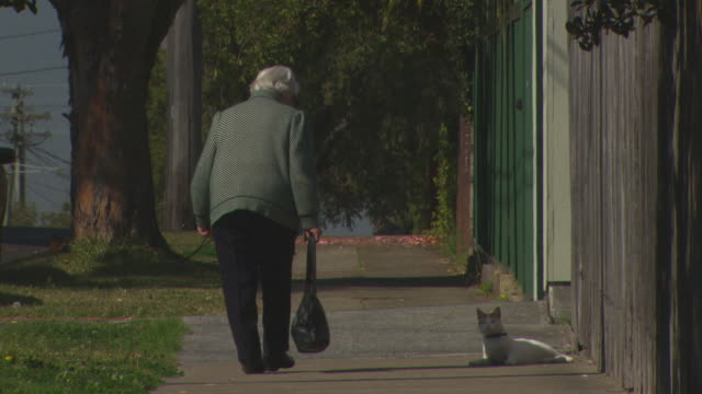 anonymous elderly lady retirement age walking away from camera up the street a stray cat lays on its back waiting for a scratch, cat following her up... - 迷子の動物点の映像素材/bロール