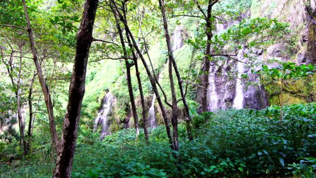 vídeos de stock, filmes e b-roll de anse des cascades; pandanus árvores - ilha da reunião - ilha da reunião