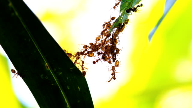 ant bridge unity team, 4k. - bridge built structure stock videos & royalty-free footage