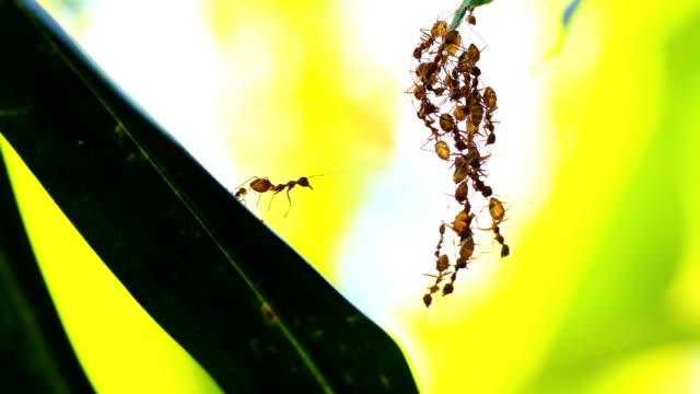 ant bridge unity team, 4k. - ant stock videos & royalty-free footage