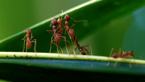 ant bridge unity team, 4k. - bridge built structure stock videos & royalty-free footage