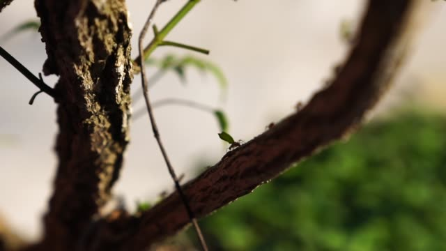 Ant carrying leaves on the tree