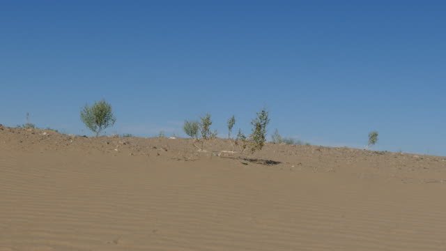 4k ant crawling over rippled sand dune in the desert - インペリアルバレー点の映像素材/bロール
