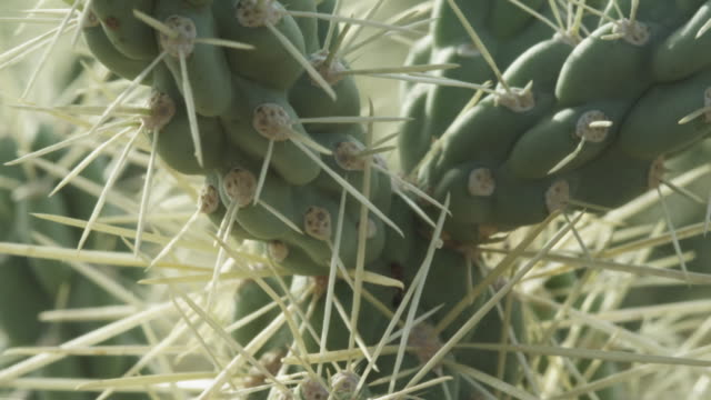 ant crawling through spines of cactus - cactus video stock e b–roll