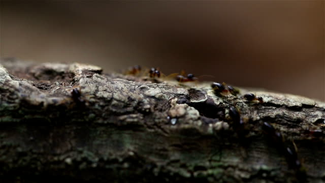 ant in forest