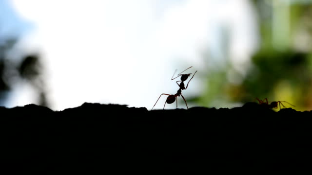 ant silhouettes in blur natural background - ant stock videos & royalty-free footage