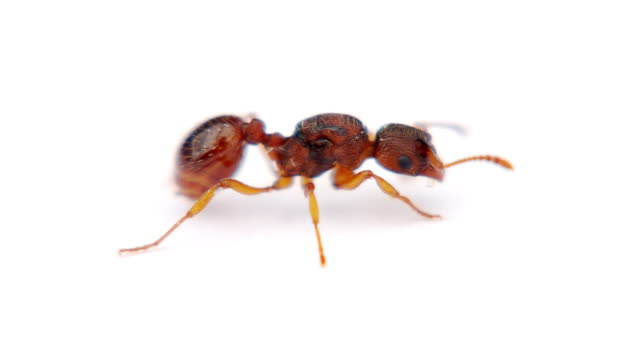 ant - ant stock videos and b-roll footage