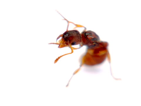 pal: ant - magnification stock videos & royalty-free footage