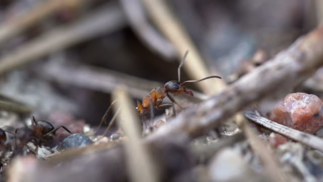 ant - medium group of animals stock videos & royalty-free footage