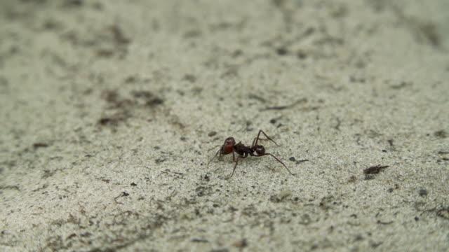 ant - insekt bildbanksvideor och videomaterial från bakom kulisserna