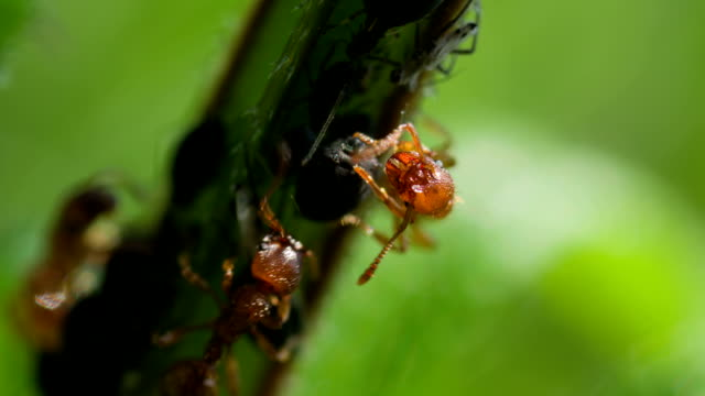 ant - nettle stock videos & royalty-free footage