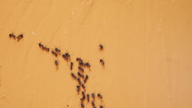 ant walk on wall. (time lapse) - ant stock videos and b-roll footage
