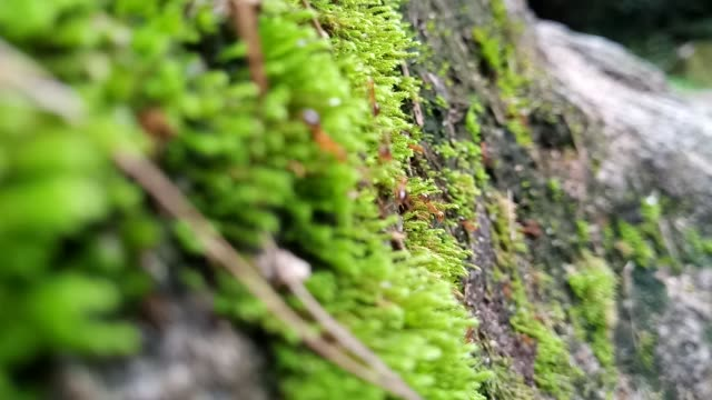 ant walking on moss - muschio video stock e b–roll