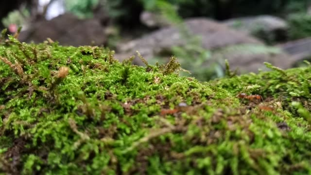 ant walking on moss - moss stock videos & royalty-free footage