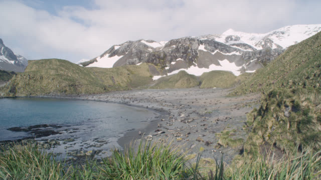 antarctic fur seal breeding colony, south georgia - insel south georgia island stock-videos und b-roll-filmmaterial