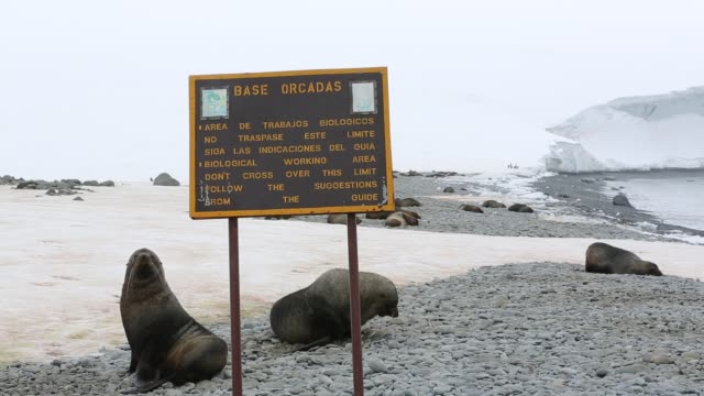 antarctic fur seals at base orcadas which is an argentine scientific station in antarctica and the oldest of the stations in antarctica still in... - wetterstation stock-videos und b-roll-filmmaterial