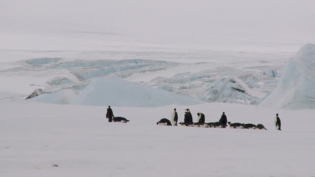 antarctic landscape with penguin group - sliding stock videos & royalty-free footage