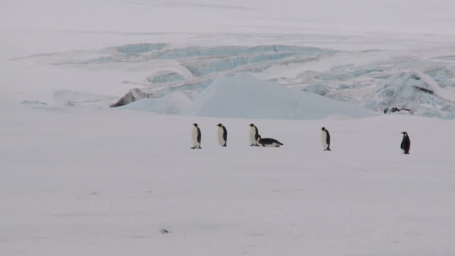 antarctic landscape with penguins - sliding stock videos & royalty-free footage