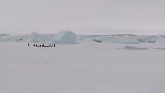 antarctic landscape with penguins - south pole stock videos & royalty-free footage