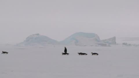 antarctic penguin caravan - sliding stock videos & royalty-free footage
