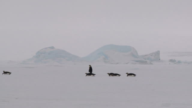 antarctic penguin caravan - gliding stock videos and b-roll footage