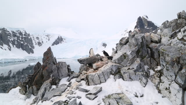 Antarctic peninsula, Orne Harbour- Chinstrap penguins nesting on the rocks and a view of the harbour
